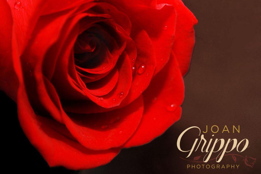 Grippo-rose-logo